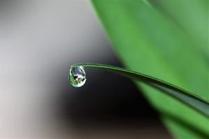 plant water drop