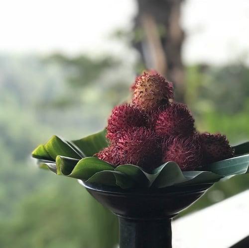 Rambutan Retinol Alternative Serum Headshot