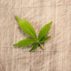 Cannabis Leaf - Twincraft Skincare's Industry Benchmark Analysis