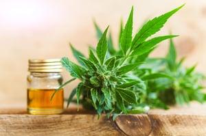 hemp plant and hemp seed oil jar