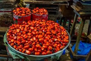 palm oil kernels for sale