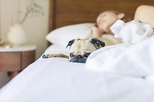 pug next to woman sleeping